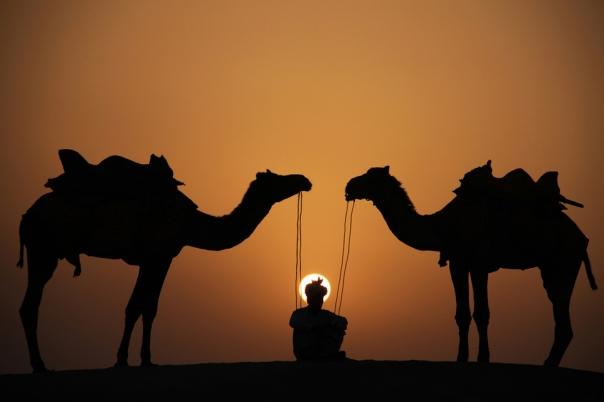 46294_camel-963